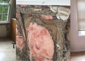 repair-paint-termite
